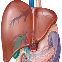 Liver Aid ajuta fiactul